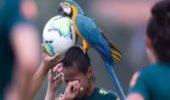 Video: Da kriegst an Vogel! Spielabbruch wegen Papagei